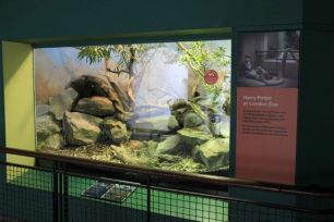 https___upload.wikimedia.org_wikipedia_commons_b_b3_London_Zoo_Reptile_House-8727029288